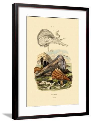 Pen Shell, 1833-39--Framed Art Print