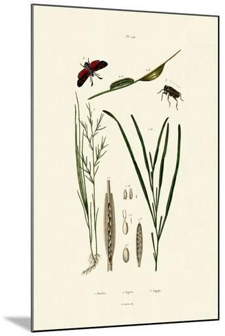 Seagrass, 1833-39--Mounted Giclee Print