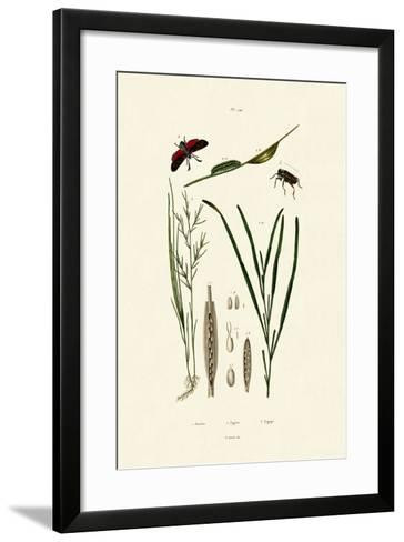 Seagrass, 1833-39--Framed Art Print