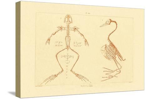 Skeleton, 1833-39--Stretched Canvas Print