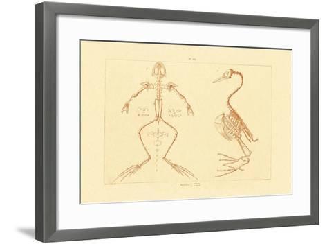 Skeleton, 1833-39--Framed Art Print