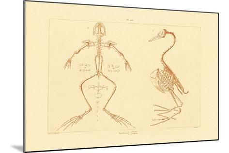 Skeleton, 1833-39--Mounted Giclee Print