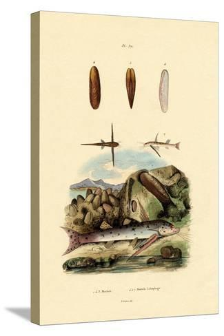 Squeaker, 1833-39--Stretched Canvas Print
