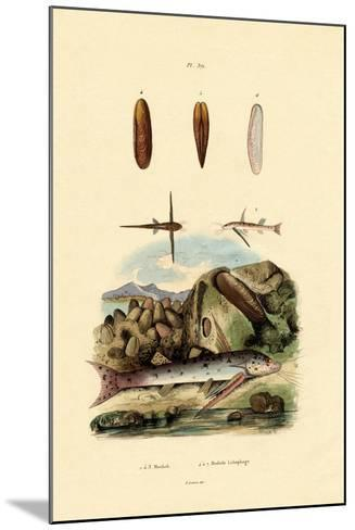 Squeaker, 1833-39--Mounted Giclee Print