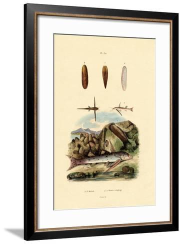 Squeaker, 1833-39--Framed Art Print
