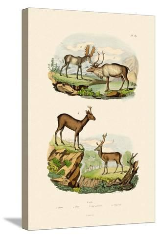 Deer, 1833-39--Stretched Canvas Print