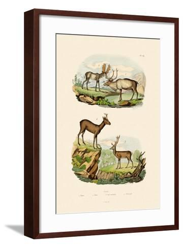 Deer, 1833-39--Framed Art Print