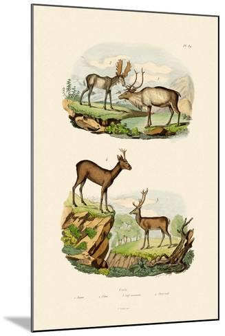 Deer, 1833-39--Mounted Giclee Print