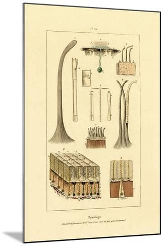 Human Skin, 1833-39--Mounted Giclee Print