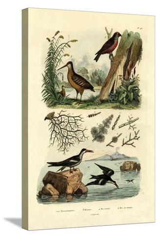 Woodcock, 1833-39--Stretched Canvas Print
