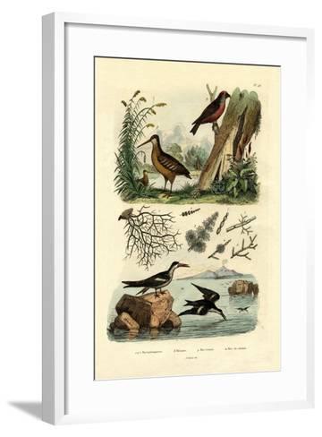 Woodcock, 1833-39--Framed Art Print