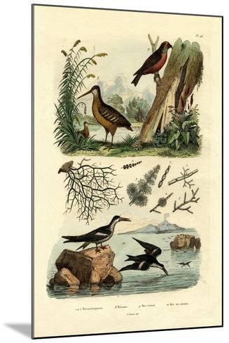 Woodcock, 1833-39--Mounted Giclee Print