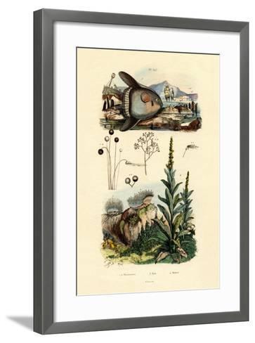 Mold, 1833-39--Framed Art Print