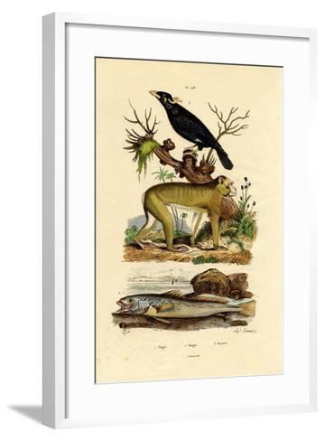 Barbary Ape, 1833-39--Framed Art Print