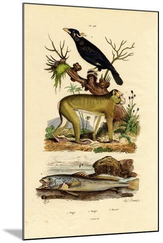 Barbary Ape, 1833-39--Mounted Giclee Print