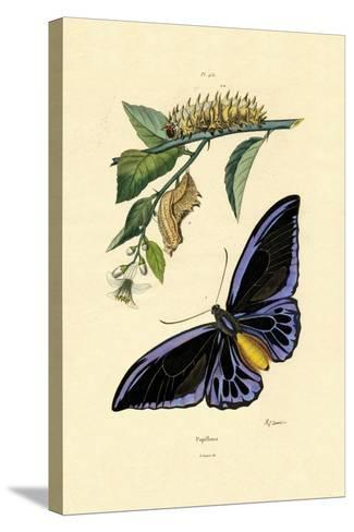 Butterflies, 1833-39--Stretched Canvas Print