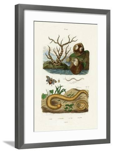 Isis Coral, 1833-39--Framed Art Print
