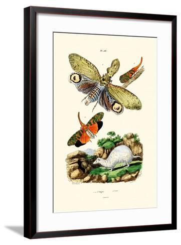 Lanternfly, 1833-39--Framed Art Print