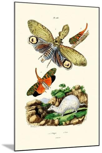 Lanternfly, 1833-39--Mounted Giclee Print