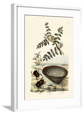 Milk Vetch, 1833-39--Framed Art Print
