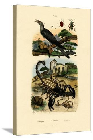 Scorpions, 1833-39--Stretched Canvas Print