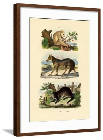 Sloth Ape, 1833-39--Framed Art Print