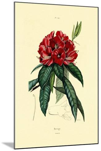 Snow Rose, 1833-39--Mounted Giclee Print