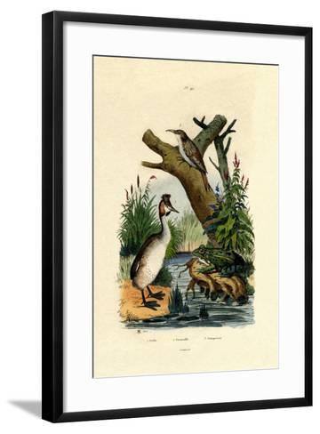 Toad, 1833-39--Framed Art Print