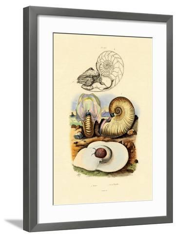 Moon Snail, 1833-39--Framed Art Print