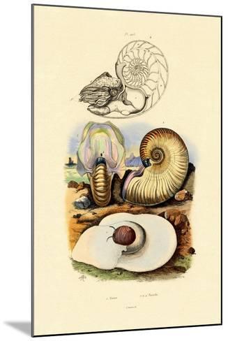 Moon Snail, 1833-39--Mounted Giclee Print
