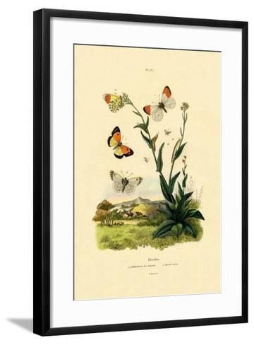 Orange Tip, 1833-39--Framed Art Print
