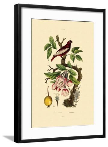 Apple, 1833-39--Framed Art Print