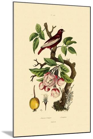 Apple, 1833-39--Mounted Giclee Print