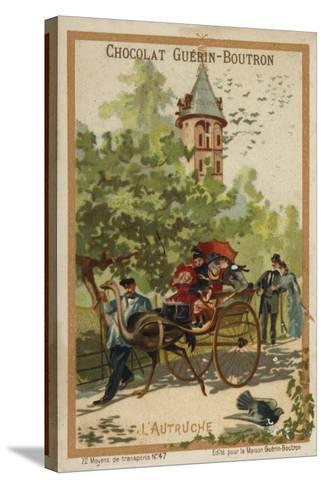 Ostrich Cart--Stretched Canvas Print