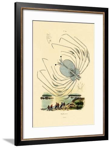 Phyllosome, 1833-39--Framed Art Print