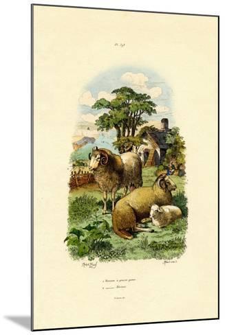 Merinosheep, 1833-39--Mounted Giclee Print
