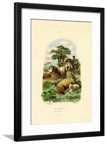Merinosheep, 1833-39--Framed Art Print