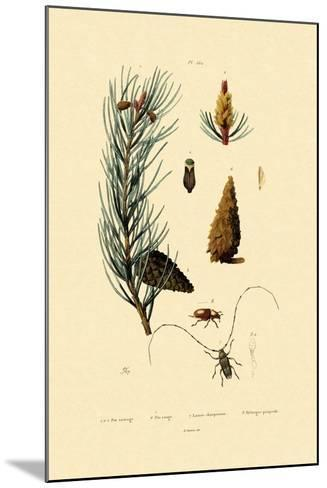 Scots Pine, 1833-39--Mounted Giclee Print