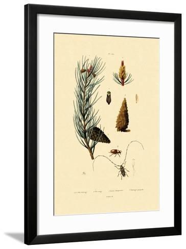 Scots Pine, 1833-39--Framed Art Print