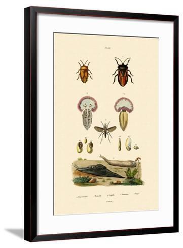 Stink Bugs, 1833-39--Framed Art Print