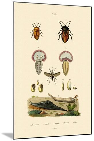 Stink Bugs, 1833-39--Mounted Giclee Print