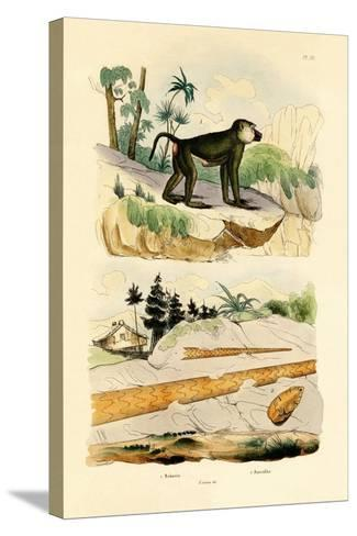 Baboon, 1833-39--Stretched Canvas Print