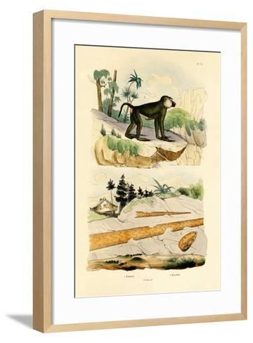 Baboon, 1833-39--Framed Art Print
