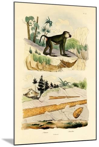 Baboon, 1833-39--Mounted Giclee Print
