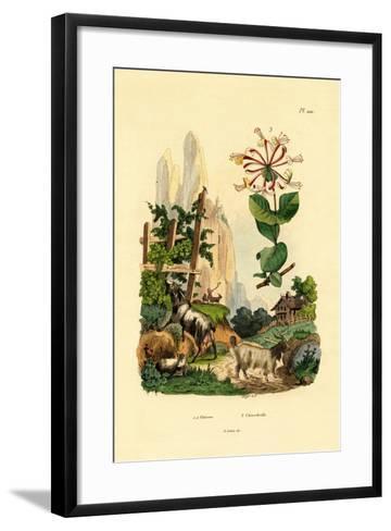 Goats, 1833-39--Framed Art Print