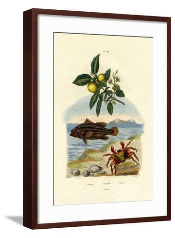 Guava, 1833-39--Framed Art Print