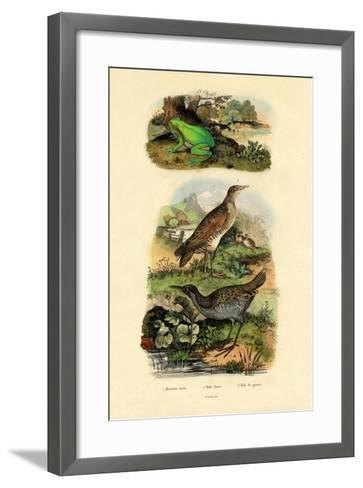 Water Rail, 1833-39--Framed Art Print