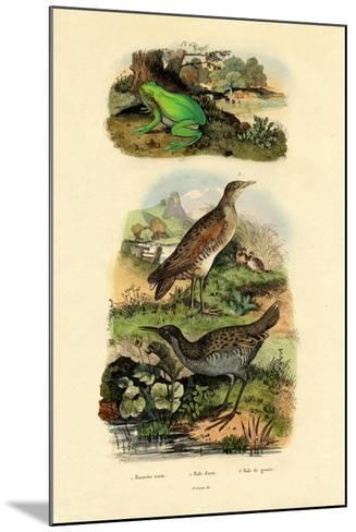 Water Rail, 1833-39--Mounted Giclee Print