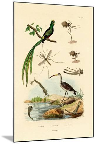 Curlew, 1833-39--Mounted Giclee Print
