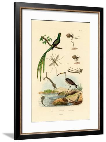 Curlew, 1833-39--Framed Art Print